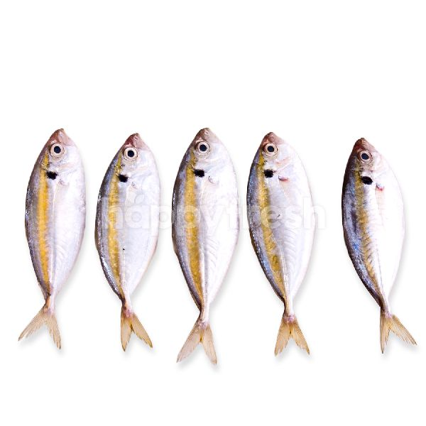 Product: Scad Fish - Image 1