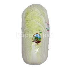 Organic White Chinese Cabbage