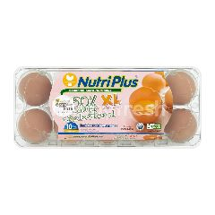 Nutriplus Xl 50% Lower Cholesterol Eggs