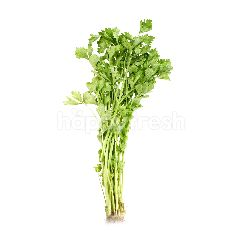 Compost Chinese Parsley