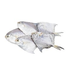 Silver Pomfret (Small)