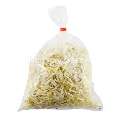 Cleaned Bean Sprout (Tauge Halus)