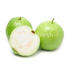 Seedless Guava KG