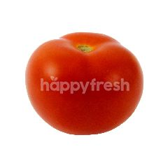 Highland Fresh Holland Tomato