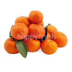 Jeruk Mandarin Gold