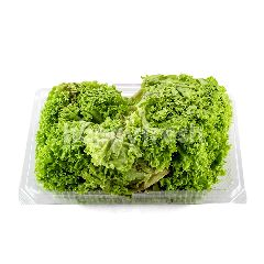 LUSHIOUS Green Coral (2 Pieces)